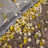 在街道和路面上的秋叶 库存图片