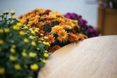 在街道咖啡馆的秋天花 库存照片