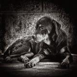 在街道放弃的哀伤的狗 库存照片