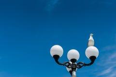 在街道灯笼的海鸥 免版税库存图片