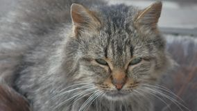 在街道特写镜头的画象罪恶不满意的无家可归的猫看坐哀伤 影视素材