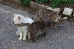 在街道的三只猫在灰色沥青 库存照片
