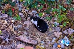 在街道的仅猫 免版税库存照片