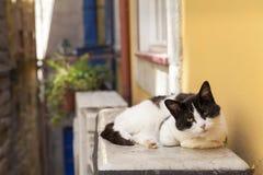 在街道的好奇离群小猫 免版税库存照片