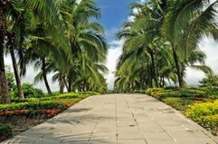 在街道的椰子树。 免版税库存图片