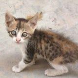 在街道的猫小猫 免版税库存图片