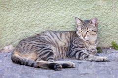 在街道的离群平纹小猫 免版税库存图片