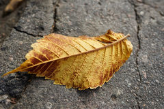 在街道的秋天叶子 库存图片
