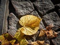 在街道的秋天叶子 免版税图库摄影