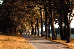 在街道的美丽的秋天车道 免版税库存图片