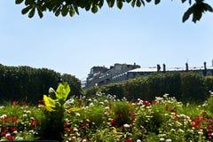 在街道的花在巴黎。 免版税图库摄影
