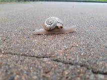 在街道的蜗牛 图库摄影