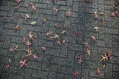 在街道石头下落的橡木叶子 库存照片