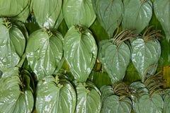 在街道货摊的槟榔子叶子 免版税库存照片