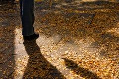 在街道边路堆的黄色秋天秋天叶子都市包围 库存图片