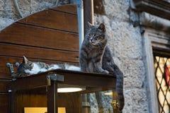 在街道陈列室的两只猫 免版税库存图片