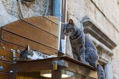 在街道陈列室的两只猫 图库摄影