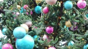 在街道,星期三, 2017年12月13日的圣诞树 库存图片