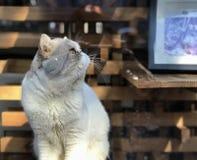 在街道Wudaoying的猫 免版税库存照片