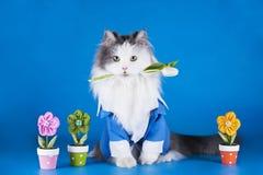 在衣服的猫 免版税库存图片