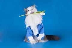 在衣服的猫 免版税库存照片