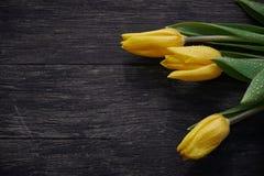 在表上的三朵可爱的湿郁金香花 库存照片