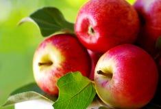 在表的成熟红色苹果 免版税库存照片