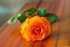 在表的红色玫瑰 免版税图库摄影