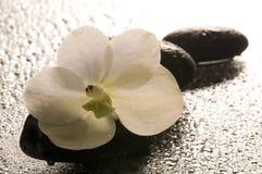 在表面湿白色的花兰花 图库摄影