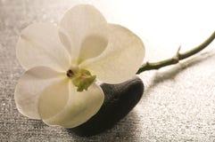 在表面湿白色的花兰花 免版税库存照片