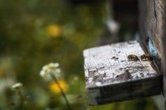 在衰落的蜂房与少量蜂留给活在殖民地colla以后 库存照片