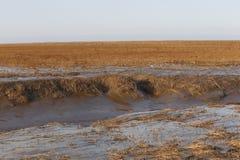 在衰退以后,杭州海湾沼泽地的美好的风景在中国 库存照片