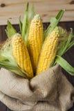 在袋子的玉米 库存照片