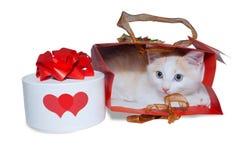 在袋子的白色小猫和有礼物的一个箱子 免版税库存照片