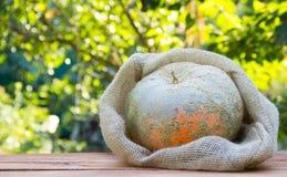 在袋子的醇厚的南瓜由天然纤维制成在一张木桌 背景绿色自然 秋天概念查出的白色 复制空间 免版税库存图片