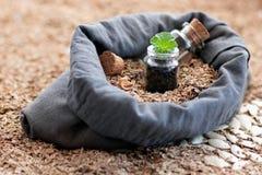 在袋子自然胡麻充满植物种子是有年幼植物的一片绿色叶子的一个玻璃瓶子 在的袋子旁边 免版税库存图片