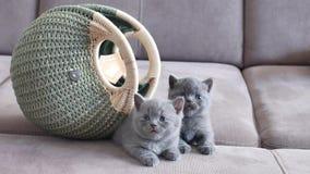 在袋子附近的小猫 影视素材