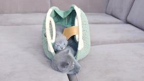 在袋子附近的小猫 股票录像