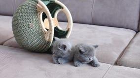 在袋子附近的小猫 股票视频