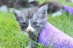 在袜子的小猫,不肯定要做什么 免版税库存照片