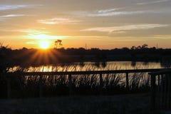 在被保护的沼泽地的佛罗里达日出 免版税库存照片