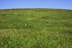 在被修剪的小山草坪之下 库存照片