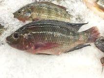 在被冰的摊位的新鲜的尼罗罗非鱼鱼 库存图片