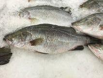 在被冰的摊位的新鲜的美洲狼鲈鱼 免版税库存照片