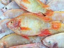 在被冰的摊位的红色罗非鱼鱼在鱼市上 图库摄影
