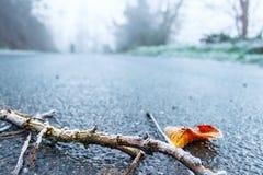 在被冰的路的冷淡的枝杈 免版税库存照片