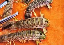 在被净化的海水浸没的坦克的活海玉米棒 免版税库存照片
