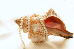 在被包裹的珍珠壳附近 库存照片