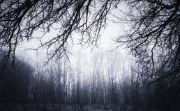 在被困扰的设置的黑暗的扭转的分支背景 库存照片