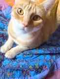 在被子的橙色平纹 免版税库存图片